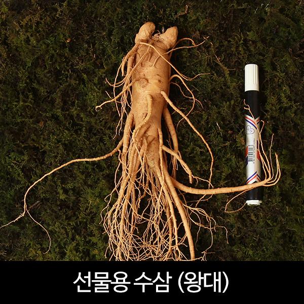 수삼 선물용 왕대 (4~6뿌리내외, 500g)