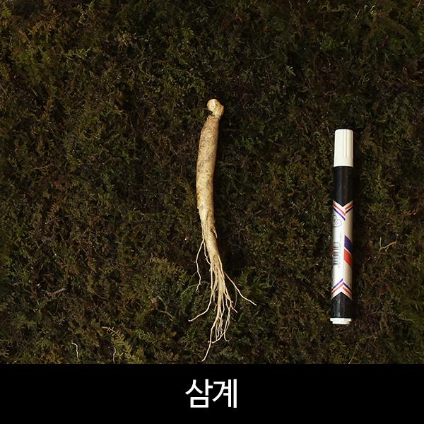 수삼 삼계 (30~40뿌리내외, 500g)