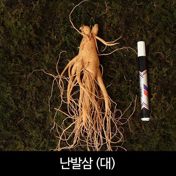 수삼 난발삼 대편 (8~11뿌리내외, 500g)