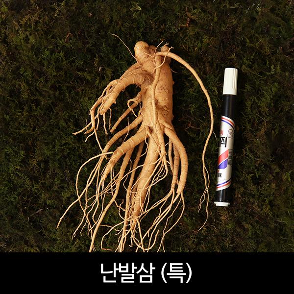 수삼 난발삼 특대편 (6~10뿌리내외, 500g)